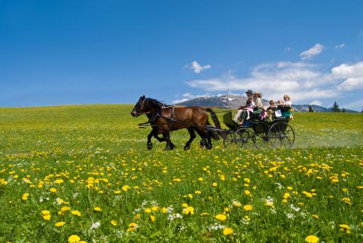Am 31. Mai 2009 - dem Pfingstsonntag - geht in Abtenau die 2. Abtenauer Pferdekutschengala über die Bühne.