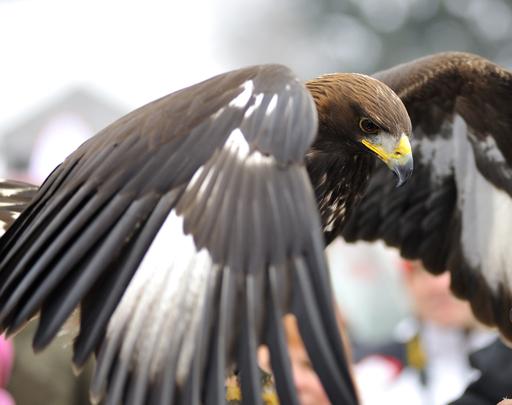 Der Tourismusverband Ferienregion Hohe Salve lädt am 23. August 09 um 11.30 Uhr zur Bergmesse mit Einweihung des Adlerhorsts und anschl. Frühschoppenfest und ab 15 Uhr zur Greifvogelvorführung von Ernst König.