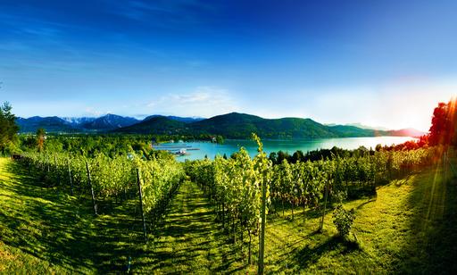 1972 wurde auf der Seewiese oberhalb der Ostbucht des Wörthersees erstmals Wein angepflanzt. Mittlerweile liefern auf dem 1,2 Hektar großen Weingut der Stadt Klagenfurt rund 2600 Rebstöcke hervorragenden Wein.