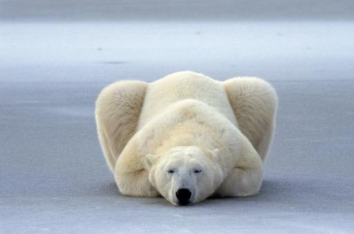 Arktische Wildnis - ganz nah