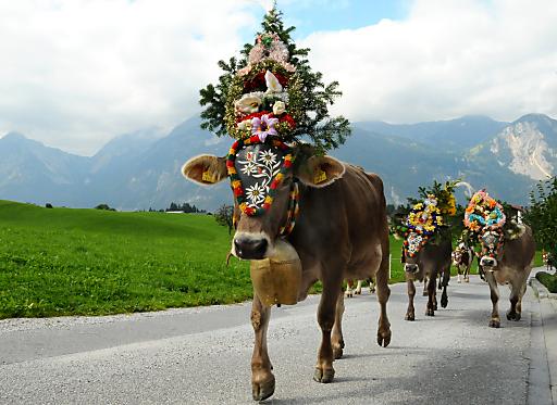 Am 18. und 25.September 2010 zeigen Zenzi & Co ihren flottem Hüftschwung beim Reither Almabtrieb in Tirol.