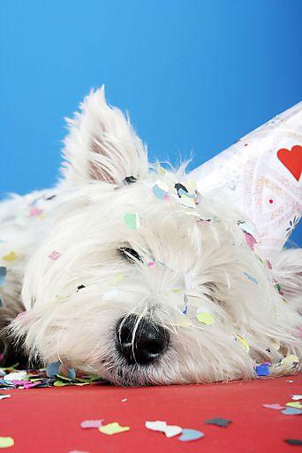 "Silvester-Party nach Hundeart: Garantiert knallfreie ""Hunde WILLKOMMEN!""- Häuser gibt es jetzt auf hunde-urlaub.net"
