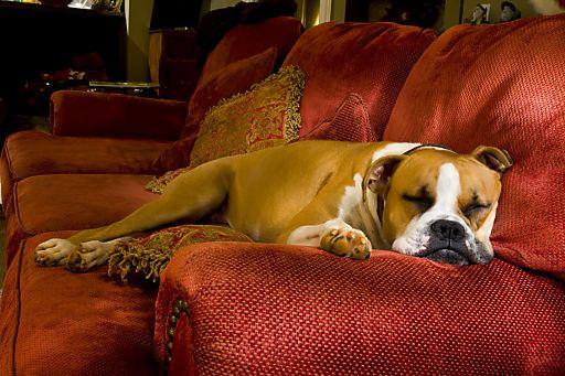 """Ganz entspannt schlafen kann der Hund beim knallfreien Silvester in einem der """"Hunde WILLKOMMEN!""""- Häuser auf hunde-urlaub.net"""