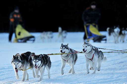 Schlittenhunde Grundkurs, Dinner im Iglu, Alpenüberquerung im Heißluftballon & Co - schöne Zeit in variantenreicher Ausprägung auf www.mydays.at.