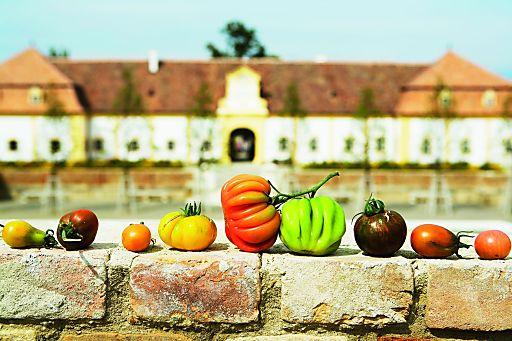 """Am 25. September ist Schloss Hof der Schauplatz eines bunten Herbstreigens mit Musik & Tanz, kulinarischen Genüssen und Erlebnisprogramm für die ganze Familie."""""""