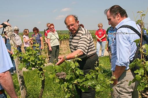 Weingartenwanderung in Poysdorf/Weinviertel