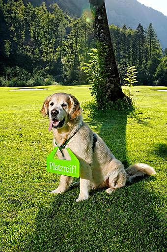 """NEU: Brandlhof Golf-Platzreife für Hunde - Hotel & Golfclub Gut Brandlhof bieten, international einzigartig, die Golf-Platzreife für Hunde. Im Bild: """"Kollin"""" - der Golden Retriever der Brandlhof-Inhaber Birgit Maier und Alexander Strobl."""