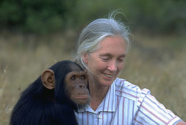 Fotograf: Jane Goodall Institut - Austria, Fotocredit: Jane Goodall Institut - Austria
