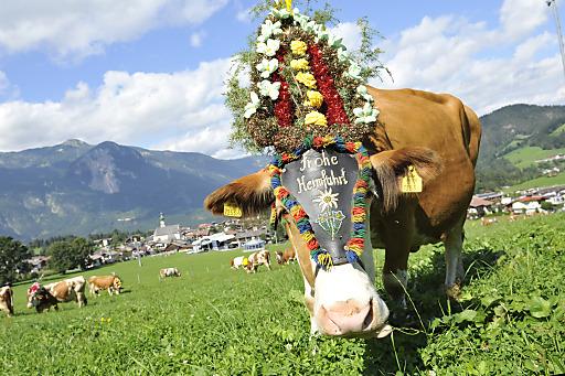 Am 20. und 27. September wird die Heimkehr der Kühe in Reith im Alpbachtal ganz groß gefeiert.