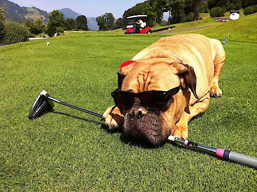 Golf Eichenheim heißt alle vierbeinigen Lieblinge herzlich willkommen.