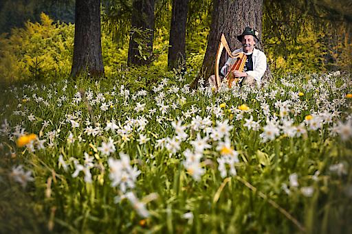 Der bekannte Märchenerzähler Helmut Wittmann aus dem Almtal mitten in der Narzissenwiese auf der Alm / Foto: MTV Almtal/ Fotografin: Monika Löff