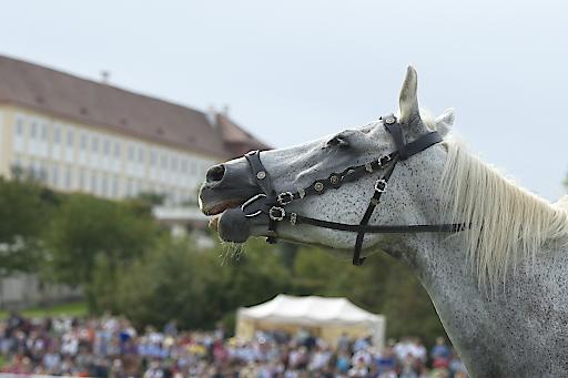 Großes Pferdefest auf Schloss Hof.