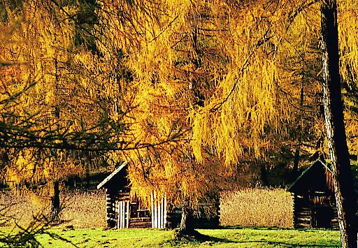 Goldener Herbst: Meist stabile Wetterlagen, der Himmel blau und die Luft klar wie nie. Dazu das sich bunt färbende Laub und die Aussicht auf eine gemütliche Hütteneinkehr. -