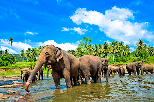 """""""100 Meter bis zum Strand"""" in Sri Lanka"""