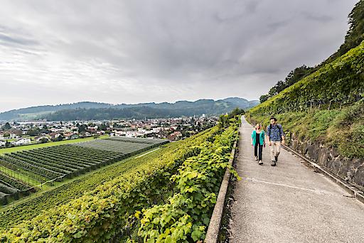 Wandern im Herbst in der Region St.Gallen-Bodensee