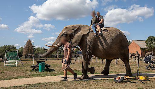 Elefantenreiten mitten in Europa - eine Ausbeutung der Tiere