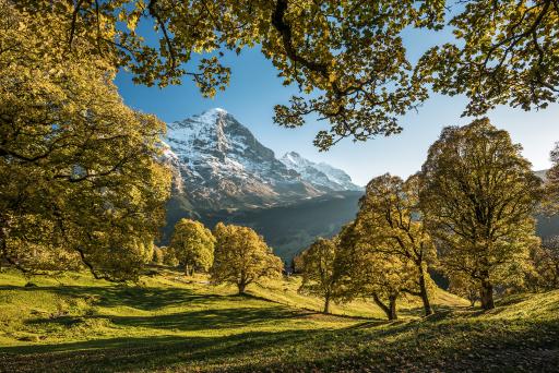 Schweiz-Urlaub mit Laubtracker | Switzerland Tourism