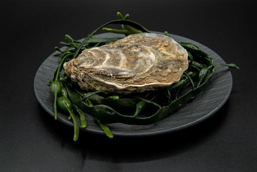 """Lebende Auster """"Fine de Clair"""" von Fischlokal Marktamt"""