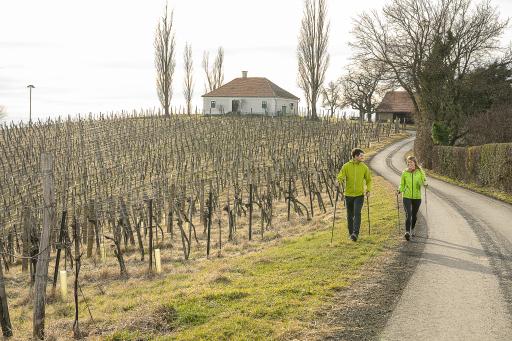 Genussvoll Abwehrkräfte stärken bei einer Wanderung durch die Weingärten von Klöch oder Tieschen in der Region Bad Radkersburg