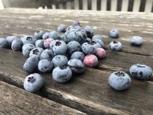 große süße Früchte der Gartenpflanze des Jahres