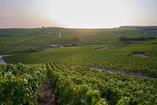 der Weingarten von Charles Heidsieck in Reims